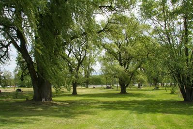 over an acre of lawn with beautiful old trees