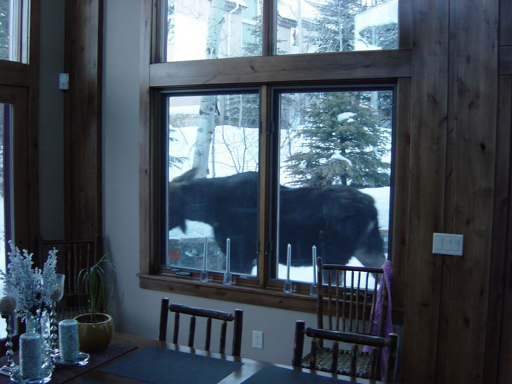 Ski in Ski Out Convenience Just Steps from ... - HomeAway