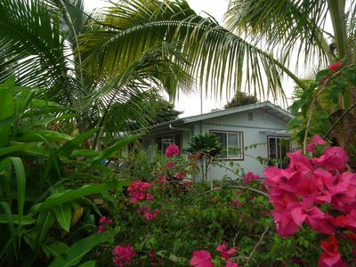 tropical view from front of home