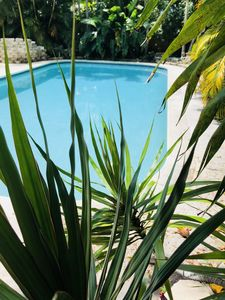 Photo for COZY Mid Century Apt.With a HEATED POOL/Close to Las Olas Blvd, Airport, Beach