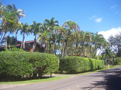 Kuhio Hwy is a two lane road going through a quiet neighborhood near the ocean.