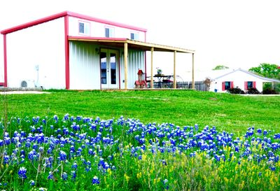 Blue Bonnet season at The Cottages at Boldheart Farms, The Pond Cottage