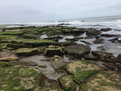 Coquina rock outcrop and tide pools...right outside our condos