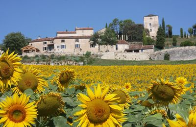 Photo for Luxury converted barns, sleeping 8 to 10 near Bastide town of Cordes sur Ciel