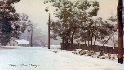 Photo for Lemon Tree Cottage, The Pearl of Leura