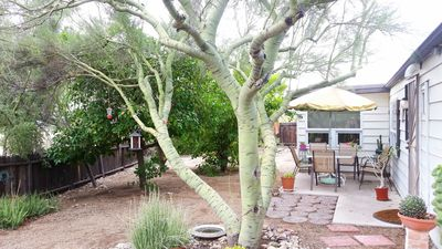 Backyard: Palo Verde, citrus grove and relaxing seated area.