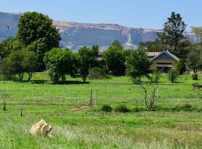 Lion Lodge. GG mountain Bakerskop in the distance. Shadow in the foreground.