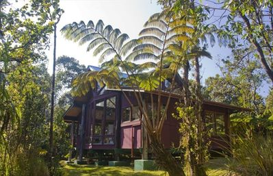 Kipuka Cottage is surrounded by native forest