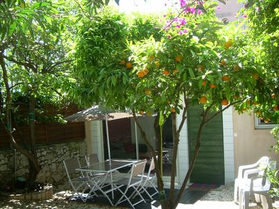 "Photo for The ""Little House"" of citrus trees"