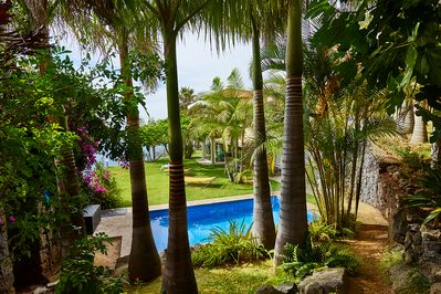 view from our palm tree garden