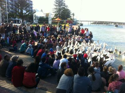 Enjoy the pelican feeding every day just 200 metres along the Boardwalk