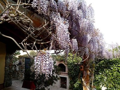 Photo for House Wisteria for 8 people