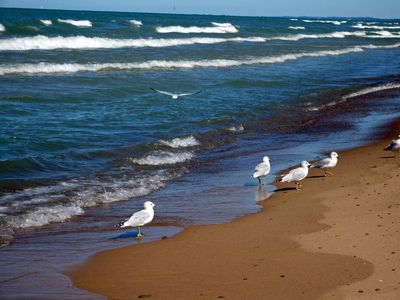 Photo for Walk to Lake Michigan Beach from Cottage in the Woods - *Seaside Fired Smores*