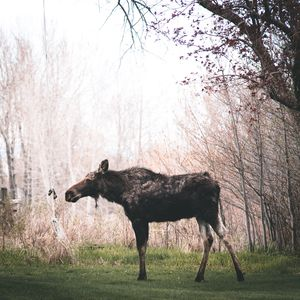 One of our many backyard wildlife visitors