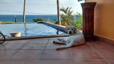 Photo for Casa Mango At Palapas Resort In San Jose Del Cabo Across From Beach