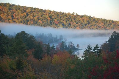 Early morning fog over Knight's Pond –a view from the  house