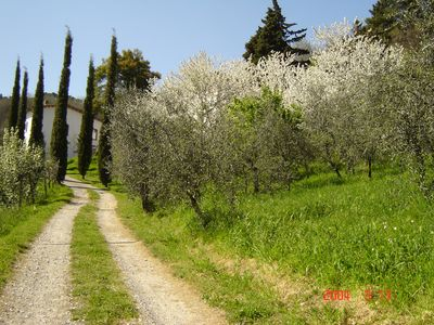 Photo for country house in the Tuscan countryside