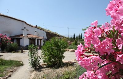 Photo for Self catering Cuevas del Zenete for 2 people