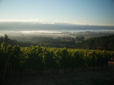 Photo for Winery Estate located in coveted Dundee Hills AVA