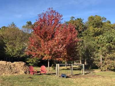 Fall at the stables
