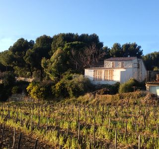 Photo for Bastide in the vineyards