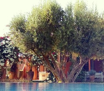 Photo for Marrakech countryside - BED & BREAKFAST great comfort-heated pool jacuzzi