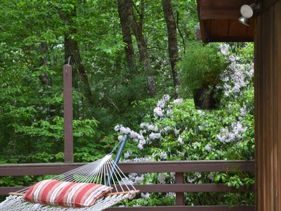 Photo for Lindal cedar home located next to Dupont State Recreational Forest.