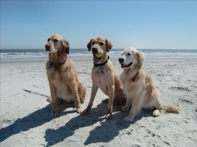 You can bring your pups - they'll love the beach!!!