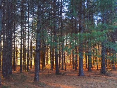 wooded areas with walking trails