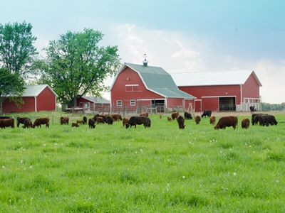 100 Acres To Explore Of Pastures Filled With Animals And Old Fashioned Fun