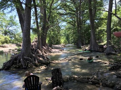 Photo for Feather Trees on the Medina River