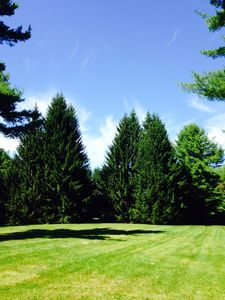 View from the back deck of our majestic 10 acre property with towering spruces.