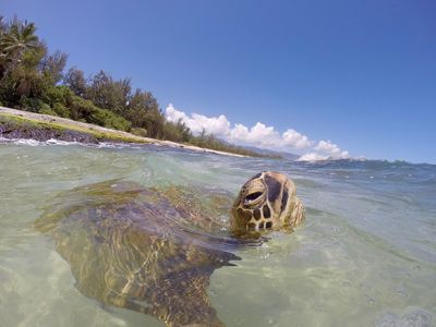Please respect the turtles and monk seals that visit the area.