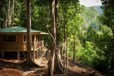 Cabin offers views on the jungle and valley at the same time.