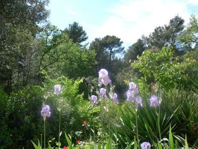 Photo for Mazet surrounded by nature  close to Aix en Provence.