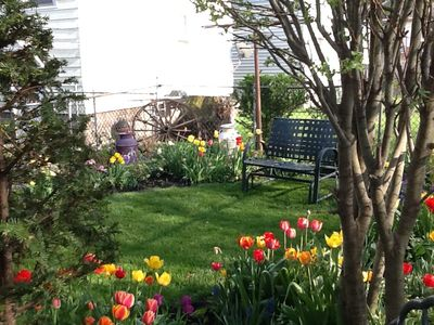 Early Spring with beautiful tulips in the back yard.
