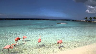 Beautiful Aruba Vacation.  Full access to a private island and more.
