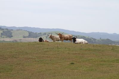 101 City close acres!  Where you see herds of Texas Longhorns, horses and sheep!