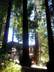 Photo for Redwood Butterfly Cabin Riverfront Private Island Seasonal Canoe Included