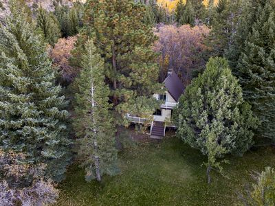 Photo for Hidden Pines Secluded Forest Property With Creek On 3 Acres & Renovated Cabin