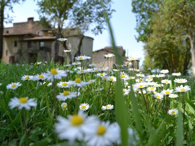 Photo for 2BR Apartment Vacation Rental in Umbertide, Umbria