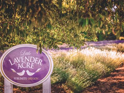 Photo for Historic Lavender Farm In the Willamette Valley