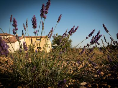 Photo for Gîte La Pierrine in the middle of lavender