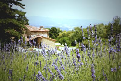 Trail your hand through the lavender as you walk to the pool.