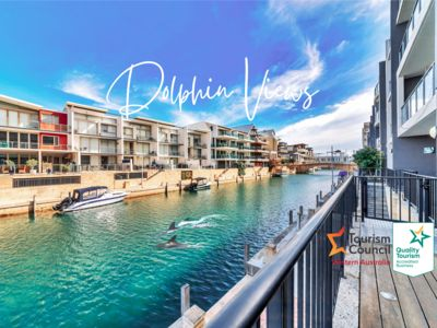 Dolphins At Your Balcony ⎈ Waterfront  Home ~ Dolphin Quay