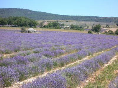 Photo for Charm and well-being in lavender