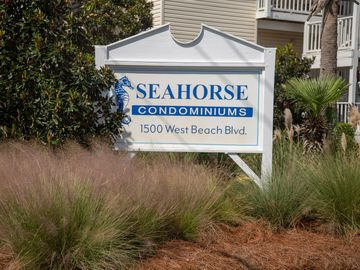 Seahorse, Gulf Shores, Alabama, United States of America
