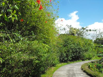 Driveway up to house lined with meticulously maintained gardens.