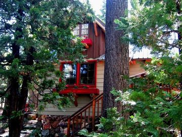Classic Old Tahoe Cabin nestled in the trees