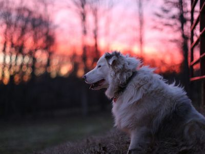 Photo for Double Merle Farm Guest Cottage
